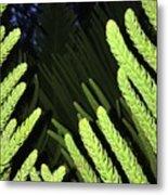 Tree Fingers Metal Print