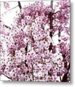 Tree Flowering In Spring Metal Print