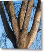 Tree Fork Metal Print