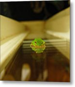 Tree Frog II Metal Print