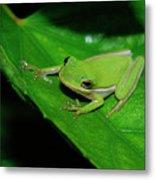 Tree Frog On Hibiscus Leaf Metal Print