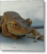 Tree Frog Out For A Walk Metal Print