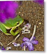 Tree Frog Under Flower Metal Print