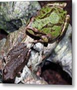 Tree Frogs Metal Print