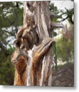 Tree Gnarl Metal Print