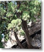 Tree Growing Through Wall Metal Print