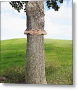 Tree Hugger 3 Metal Print
