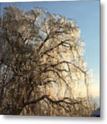 Tree In Ice Metal Print