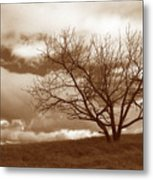 Tree In Storm Metal Print
