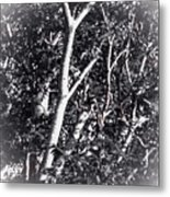 Tree In Summer In Black And White Metal Print