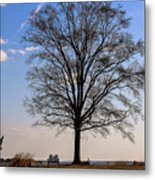 Tree In The Morning Light Metal Print