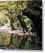 Tree In The River Metal Print