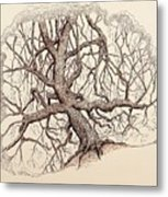 Tree In Winter II Metal Print
