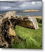 Dead Tree Laying In Front Of A Lake Metal Print