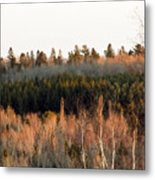 Tree Layer Cake Metal Print
