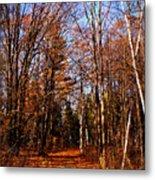 Tree Lined Path Metal Print