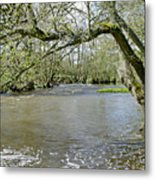Tree-lined - Swollen River Dove At Thorpe Metal Print