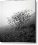 Tree Mist Metal Print