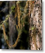 Tree Moss - Green Soft Beauty Metal Print