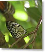 Tree Nymph Butterfly Sitting On A Tree Branch Metal Print