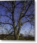 Tree Of Blue Metal Print