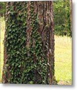 Tree Of Ivy Metal Print