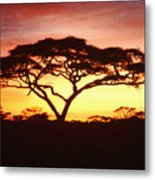 Tree Of Life Africa Metal Print