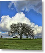 Tree Of Life Style Oak Tree And Coluds Metal Print