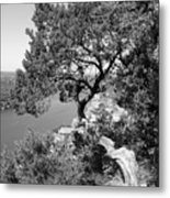 Tree On Mount Bonnell Metal Print