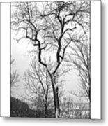 Tree On The Western Promenade Metal Print