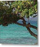 Tree Over Sapphire Beach Metal Print