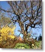 Tree Photo 993 Metal Print