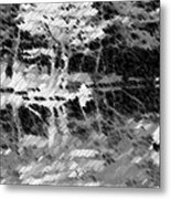 Tree Reflecting In Pond Metal Print
