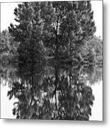 Tree Reflection In Black And White Metal Print