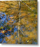 Tree Reflections Metal Print