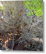 Tree Rock And Life Metal Print