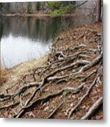 Tree Roots 2  Metal Print
