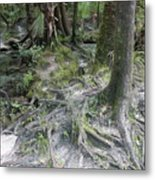 Tree Roots And Lithia Springs Metal Print