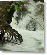 Tree Roots In The Water Metal Print