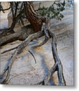 Tree Roots On The Tent Rock Metal Print