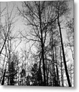 Tree Silhouette II Bw Metal Print