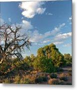 Tree Sky Utah Metal Print