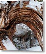 Tree Stump Arch Metal Print