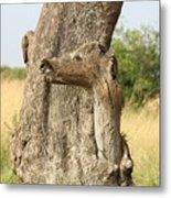 Tree Stump Metal Print