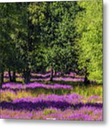 Tree Stumps In Common Heather Field Metal Print