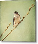Tree Swallow 4 Metal Print