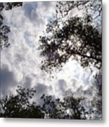 Tree Swirl Metal Print