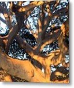 Tree Tangle 0551 Metal Print