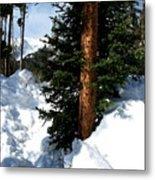 Tree Texture Metal Print