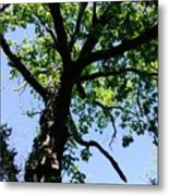 Tree Top Metal Print